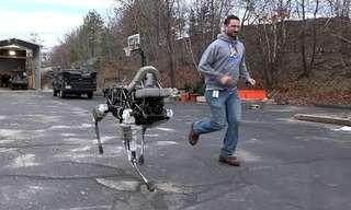 למרות גודלו הקטן, הרובוט ספוט מסוגל לעשות דברים מדהימים!
