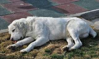 כיצד להבחין ולטפל בכלב שסובל ממכת חום