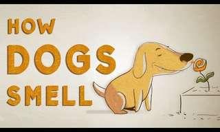 איך כלב רואה עם האף?
