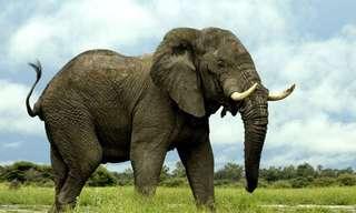 20 עובדות מדהימות על ממלכת החיות