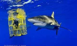 צילומי כרישים מדהימים של הצלם ברייאן סקרי
