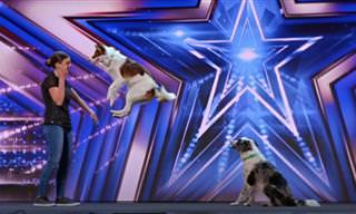 מופע אקרובטי מדהים של שני כלבים מוכשרים