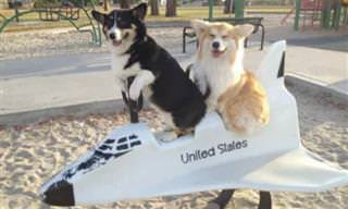 15 תמונות של כלבים מתוקים שישמחו אתכם ברגע!