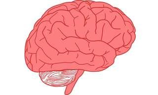הזדקנות המוח שווה להזדקנות העור