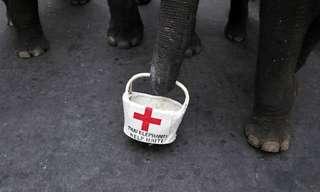 אפילו הפילים בתאילנד מתגייסים