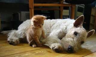 תסמיני מחלות נפוצות אצל כלבים וחתולים