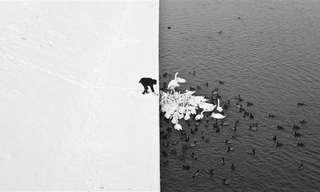 תמונות טבע מינימליסטיות ומדהימות
