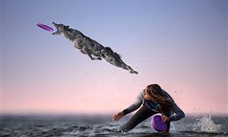 18 תמונות זוכות מתחרות הצילום הבינלאומית 2020 בנושא תנועה