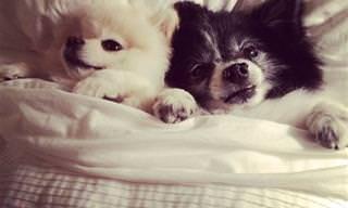 כלבים חמודים שנרדמו במיטה של הבעלים
