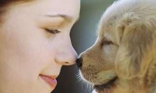 גורי הכלבים החמודים בעולם!