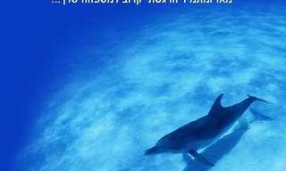 הצילו את הדולפינים