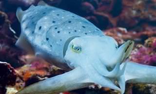 7 סרטוני טבע על בעלי חיים מפתיעים ומדהימים
