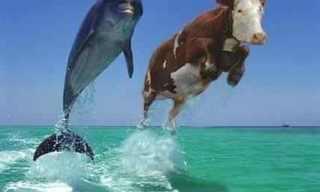 מבחן הדולפינים - האם אתם במתח?