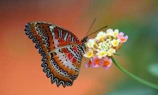 הפרפר והגולם - סיפור עם מוסר השכל