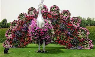 גן הפרחים המדהים של דובאי