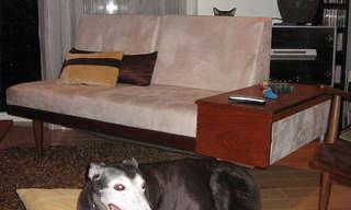 כלבים וחתולים הורסים תמונות - מצחיק!