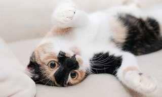 מדריך לשפת הגוף של החתול שלכם