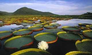 מסע עוצר נשימה דרך נופי ברזיל
