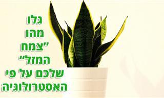 איזה צמח מתאים לכם לגדל על פי המזל האסטרולוגי שלכם?