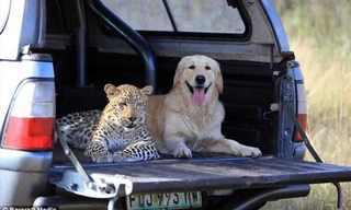 חברויות מיוחדות של בעלי חיים - מקסים!