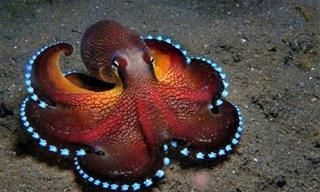 14 חיות ים מוזרות ביותר שאתם לא מכירים