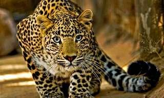 12 הוכחות מדהימות למורכבות עולם החי