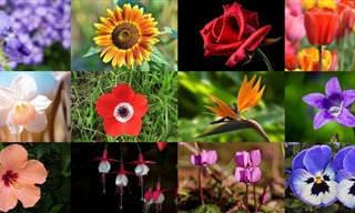 """""""זר סרטונים"""" של 12 סוגי פרחים יפים"""