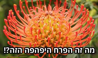 17 פרחים בעלי מראה משונה ומיוחד במינו שכדאי שתכירו