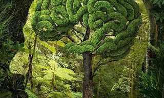 כשמציאות ודמיון נפגשים - תמונות מדהימות!