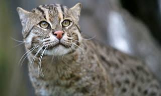 15 חתולים מדהימים שלא הכרתם