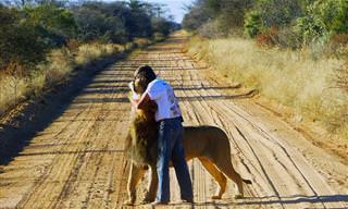 סיפורו המדהים והמרגש של ציון האריה