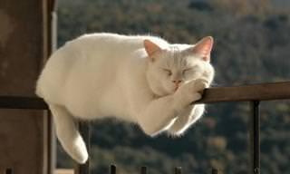 22 חתולים שנרדמו במקומות מפתיעים ומצחיקים
