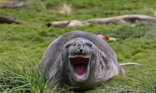 15 תמונות מצחיקות של חיות בר אנושיות במיוחד