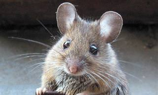 מלכודת עכברים - סיפור קצר על התרומה שלנו לזולת