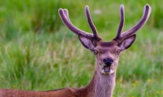 14 תמונות חמודות ומצחיקות של בעלי חיים שתענוג לראות!