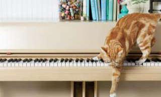 יום החיות הבינלאומי: כיצד להימנע מ-10 טעויות נפוצות!