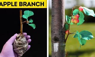 בסרטון הזה יש 23 טיפים יעילים שיעזרו לצמחייה שלכם להיראות נפלא!