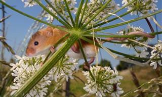 17 התמונות הזוכות מתחרות צילום חיות הבר של בריטניה