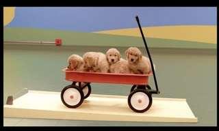 כלבים יוצרים תגובת שרשרת