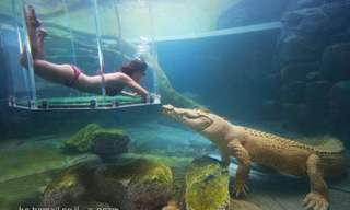 לשחות עם תנינים