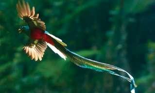 15 מהציפורים המדהימות ביותר בעולם