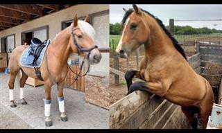 הסוסים החמודים והמצחיקים מראים לנו למה כולנו אוהבים אותם!