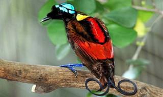 18 הציפורים הצבעוניות ביותר בעולם