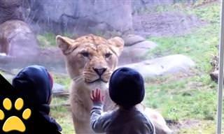 כשילדים ובעלי חיים נפגשים בגן החיות...