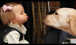 הסרטון החמוד הזה יוכיח לכם שלחיות ולתינוקות יש שפה משותפת!