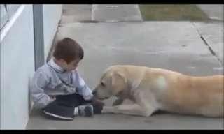 אהבה ללא מילים - חיבור מרגש בין כלבה לילד
