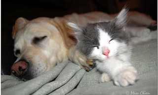 לישון עם האויב - כלבים וחתולים מתכרבלים!