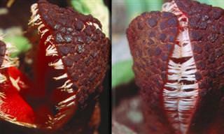 14 צמחים מפחידים ומוזרים שגדלים בטבע