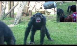 הבחור הכי חכם בגן החיות