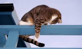 חתולים שמגלים את הזנב שלהם לראשונה